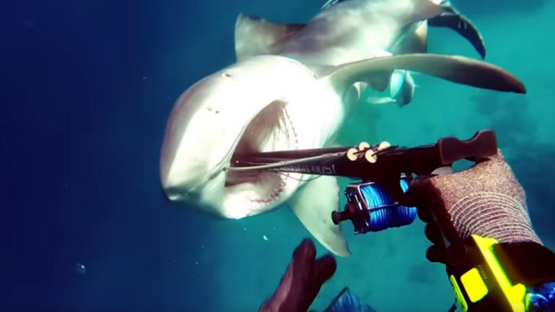 O momento em que um mergulhador escapa ao ataque de um tubarão